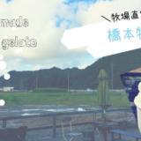 【橋本牧場(はしもとぼくじょう)】田んぼの中心でジェラートを!鹿野の牧場直営のイタリアンジェラートのお店/鳥取市