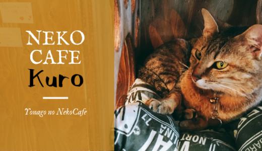 【NEKO CAFE KURO】米子初!にゃんこに癒やされる猫カフェにいってきたよ!/米子市